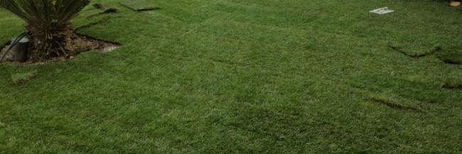 La belle pelouse en 24h !
