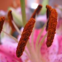 Plantes vivaces : achat et entretien