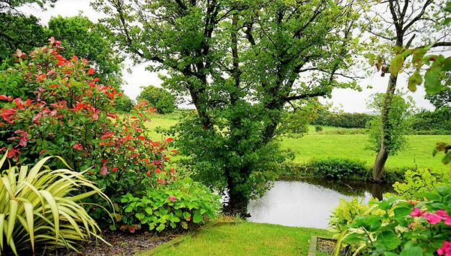 tondeuse gazon jardin