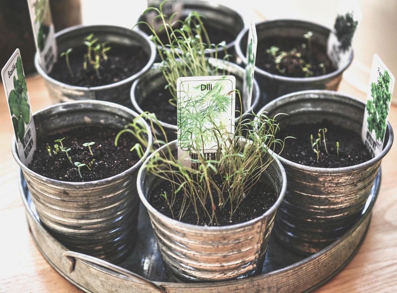 Plantes aromatiques et balcon sont-ils compatibles ?